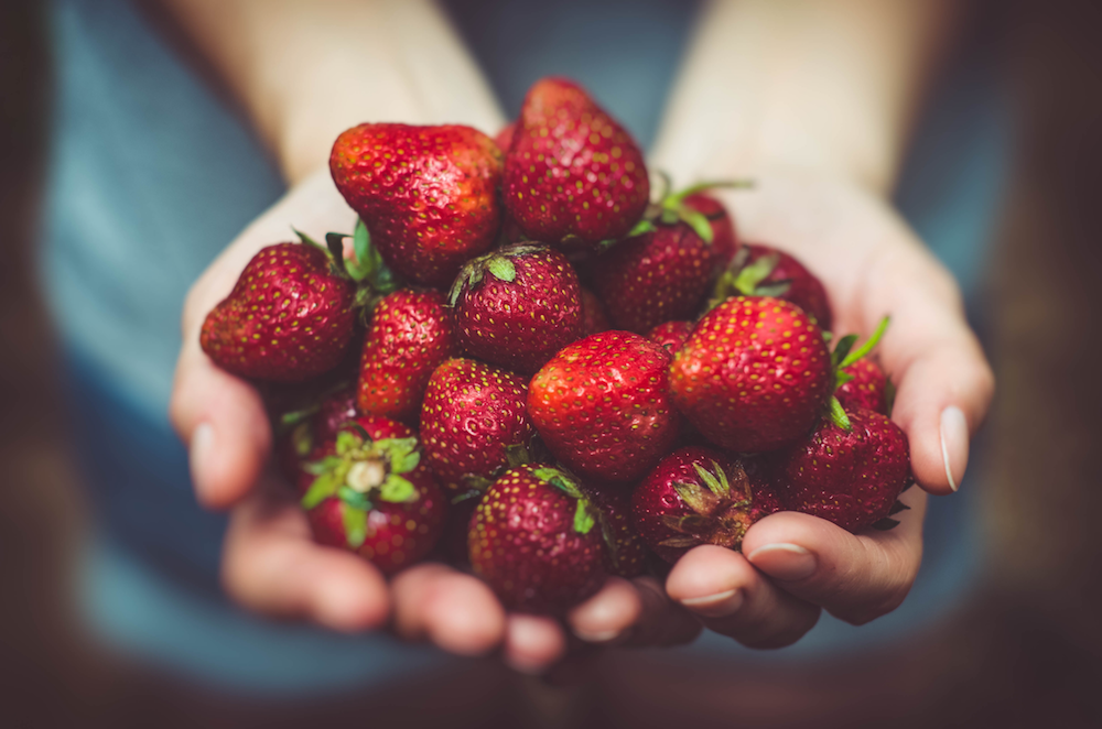 Strawberries in the palms of one's hands